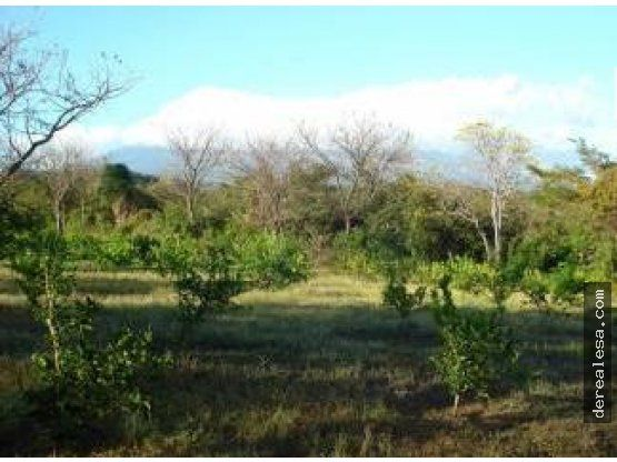 finca 90ha reforestada en bagaces