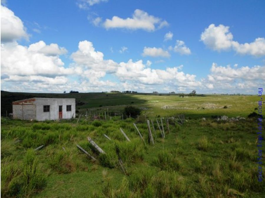 campo 51 hectareas ganadero forestal en lavalleja
