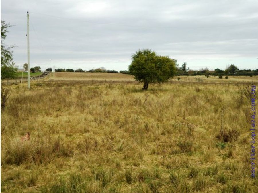 campo 57 has muy buenas tierras lavalleja
