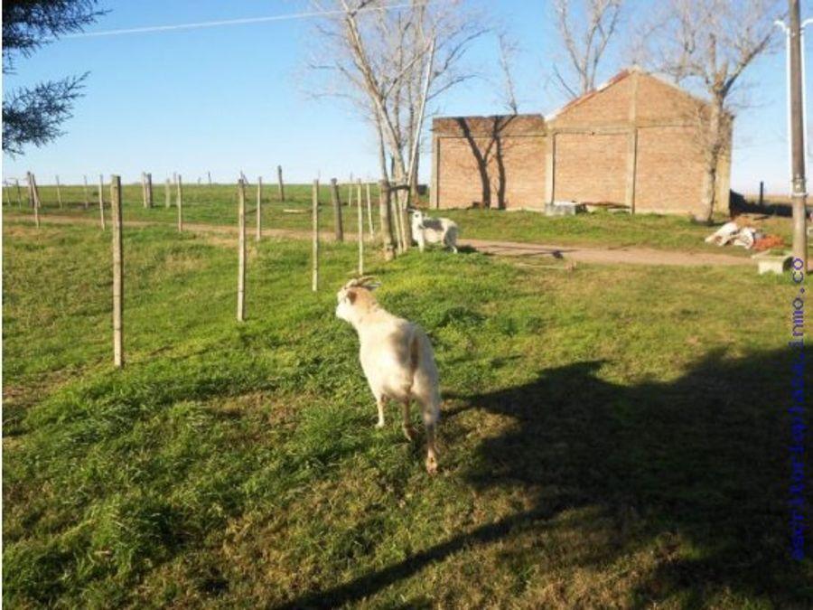 campo 45 has agricola buen arroyo