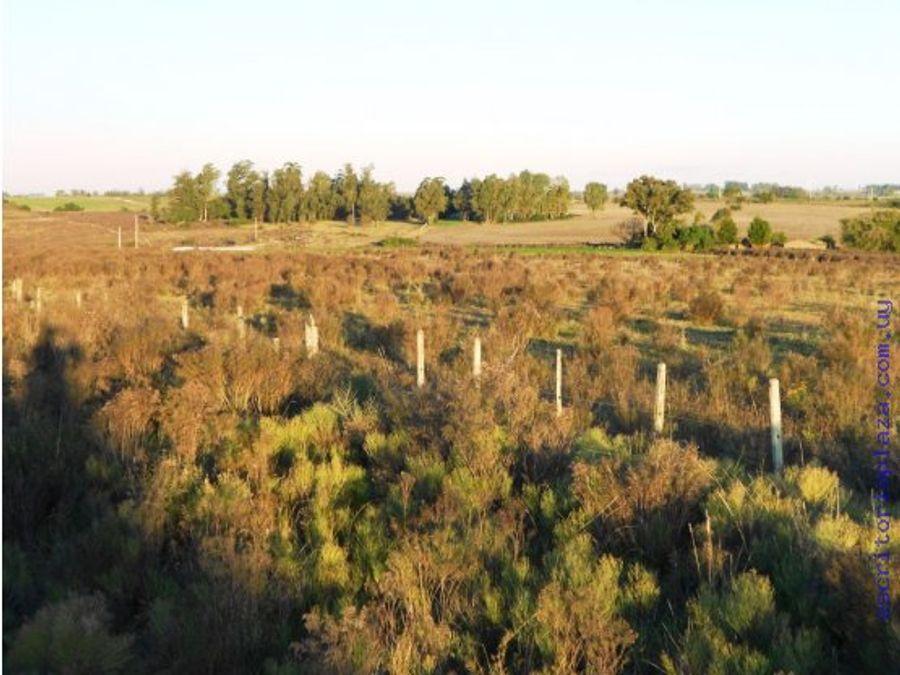 campo 45 has agricola y arroyo florida