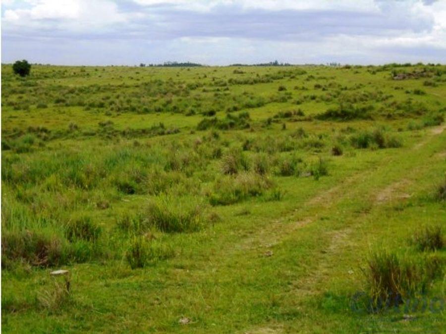 campo 55 has sobre ruta en lavalleja