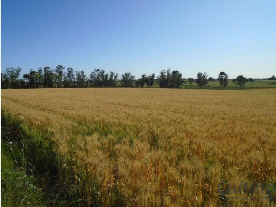 campo 40 has agricola con casa en lavalleja