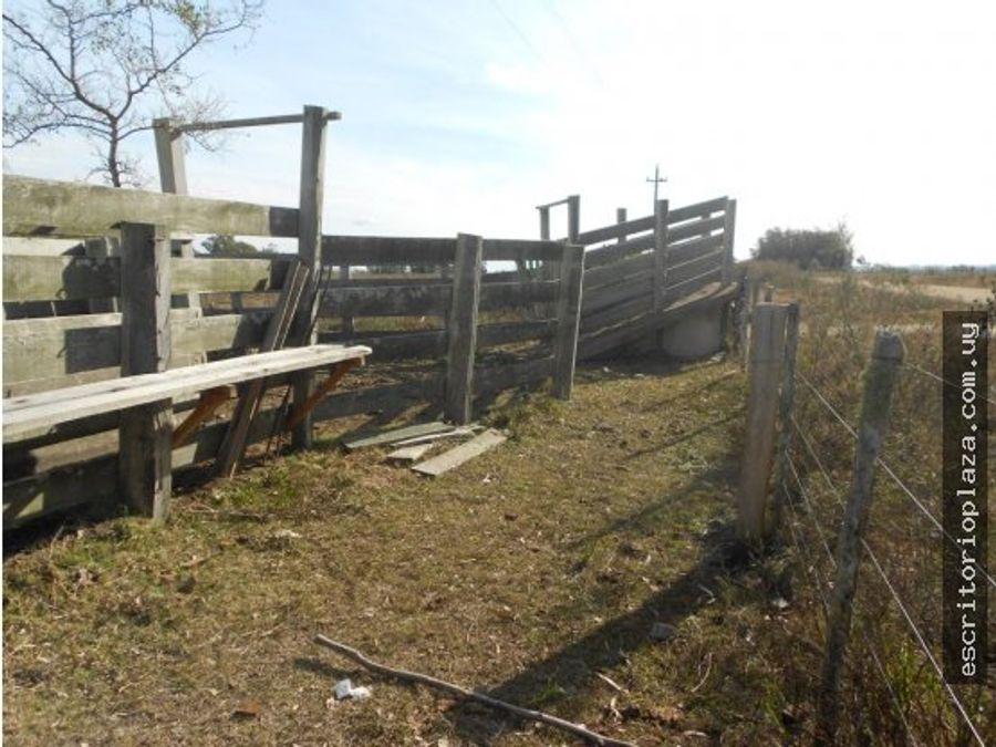 campo 26 hectareas agricola en lavalleja