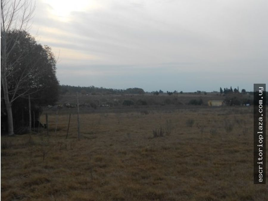 terreno 9757mt2 en tala canelones