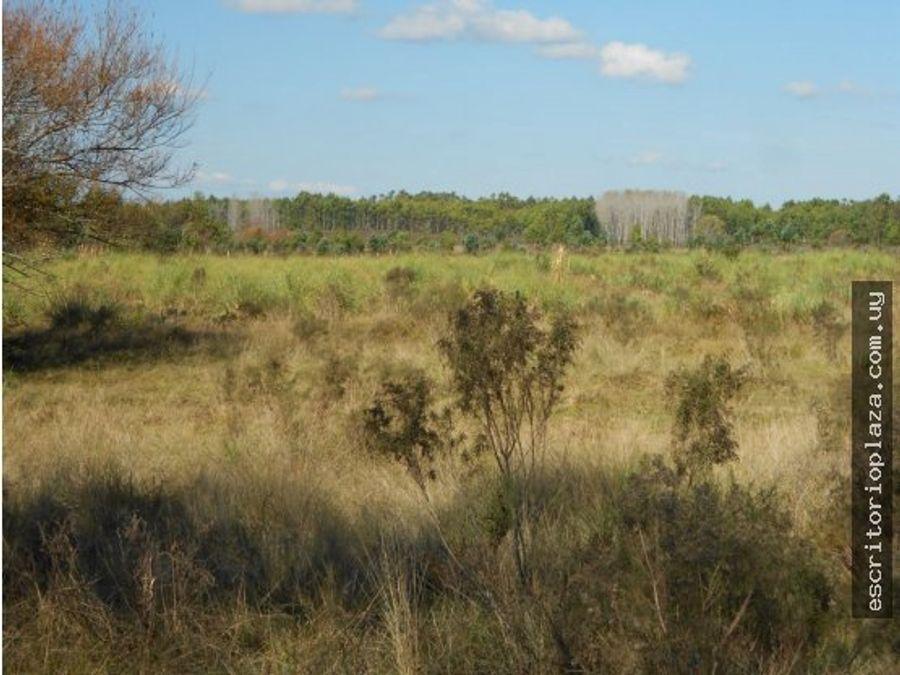 campo 35 has migues canelones