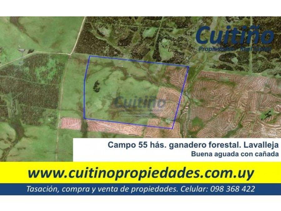 campo 55 has ganadero forestal lavalleja