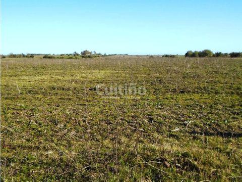 campo 50 has agricola ganadero