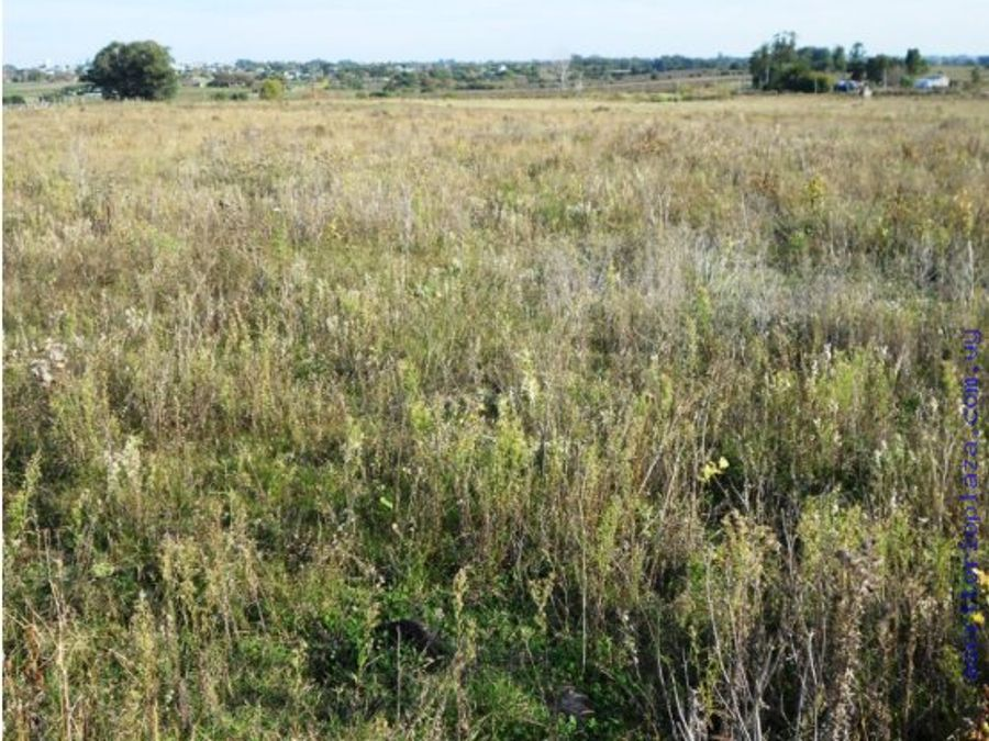 campo 22 has agricola ganadero tala canelones