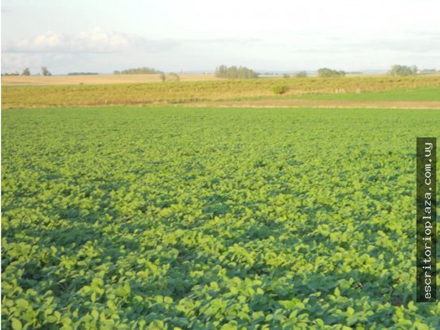 campo 27 hectareas agricola en lavalleja