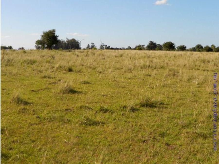 campo 15 has muy bueno agricola
