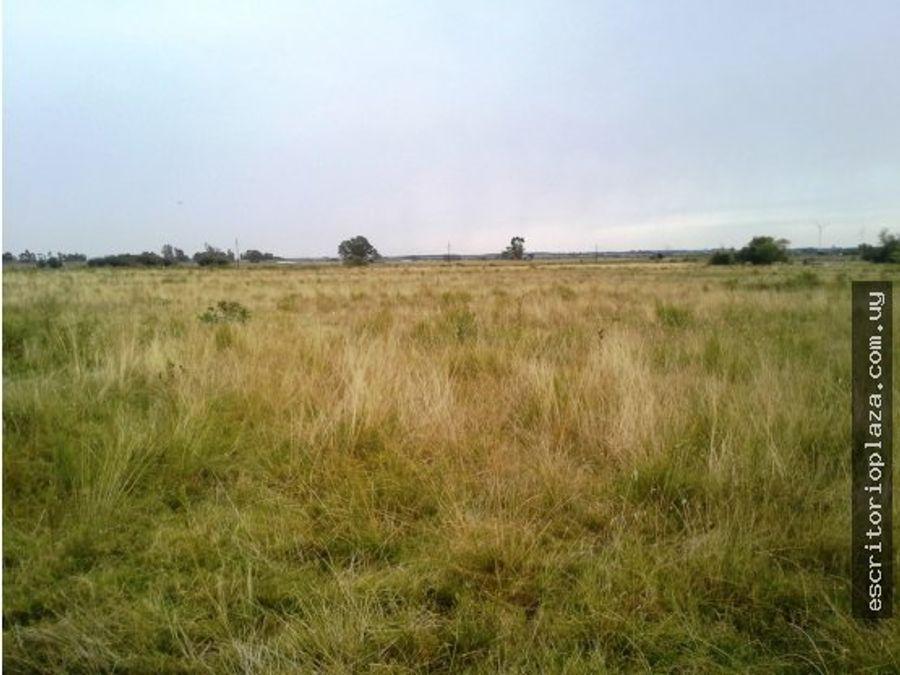 campo 45 has ideal agroindustria logistica