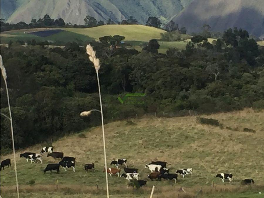 se vende finca ganadera valle del cauca barragan