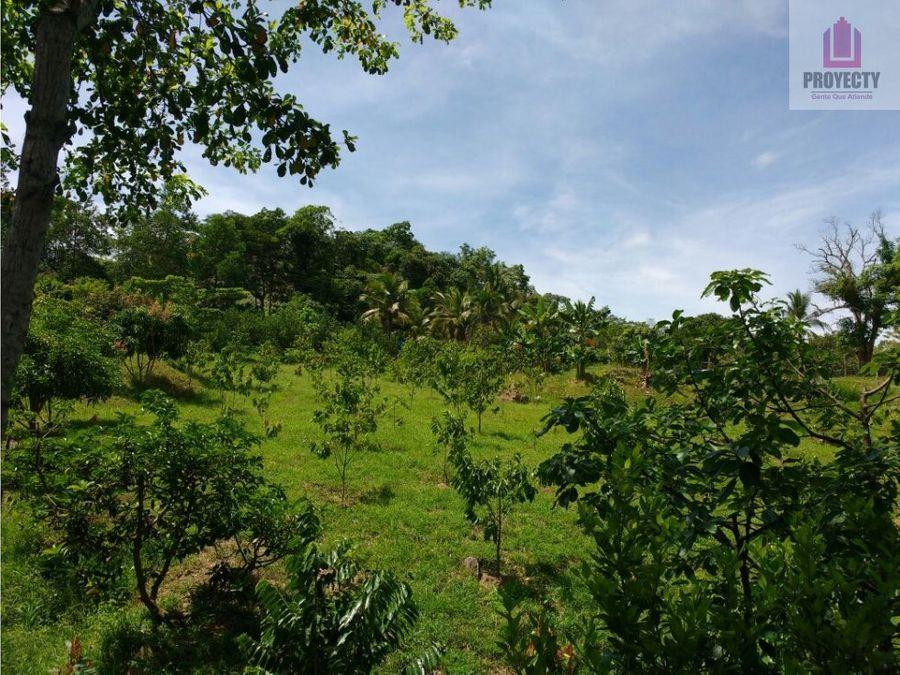 venta finca cucuta tibu 100 hectareas