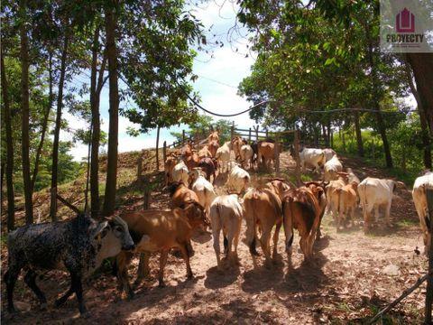 finca en venta cucuta tibu 100 hectareas