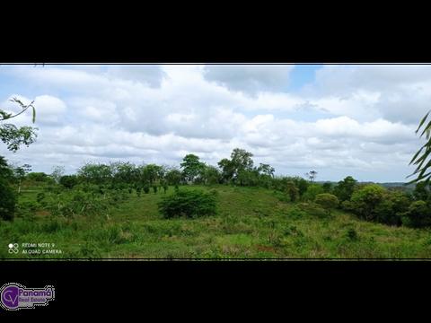 se vende terreno titulado 10000mt2 en potrero grande