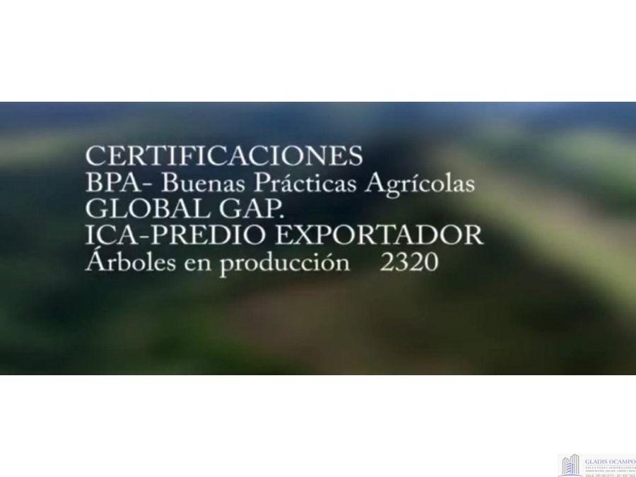 finca certificada yarumalpereira