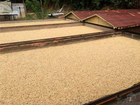 finca cafetera altamente productiva en betania