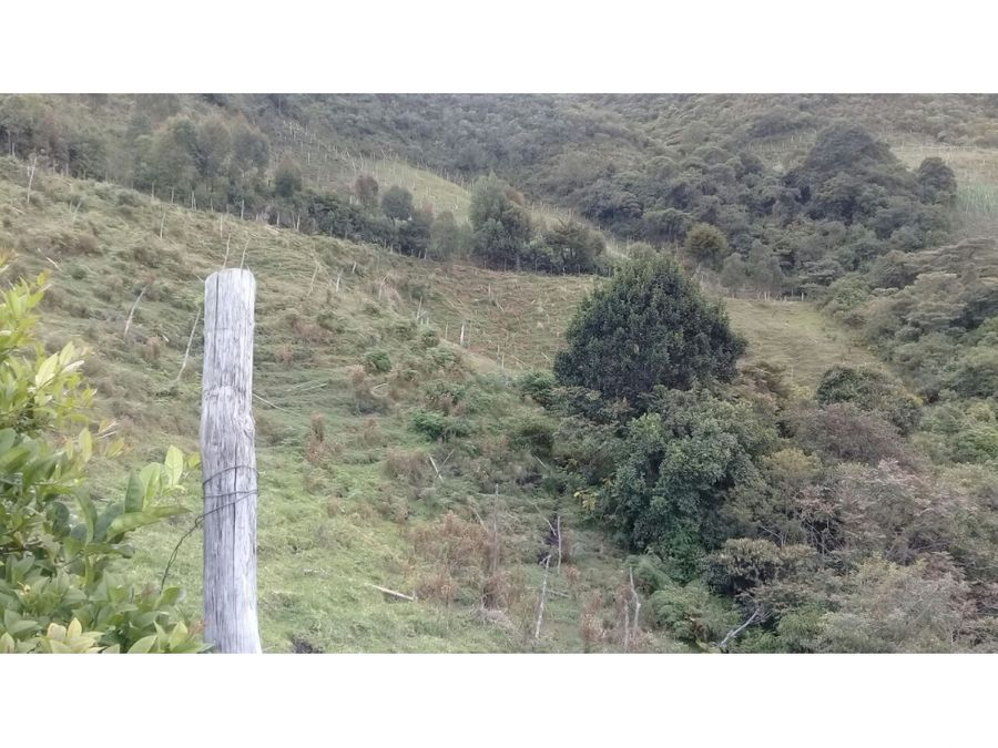 finca de 32 hectareas con aguacate hass en abejorral
