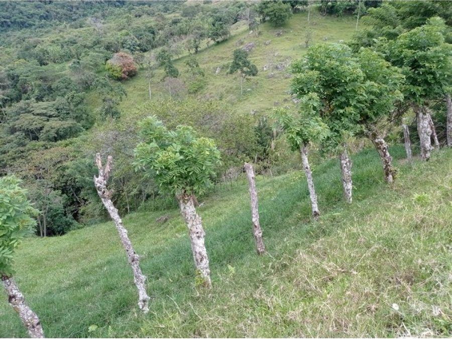 finca lote con espectacular vista en titiribi para construir su casa