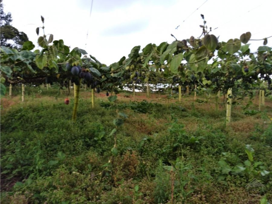finca muy cerca el pueblo para cultivar o para lecheria