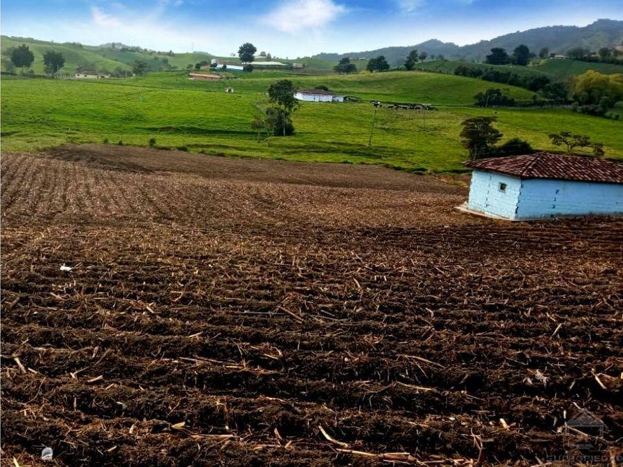 finca pequena y plana con cultivo de papa y cosecha cerca