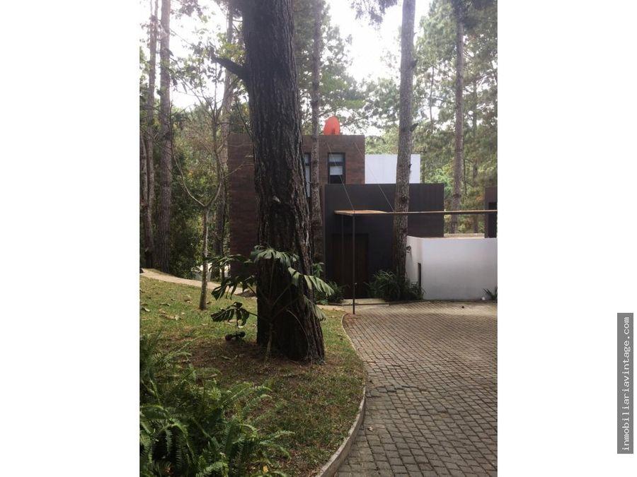 pinos de muxbal un lugar rodeado de naturaleza