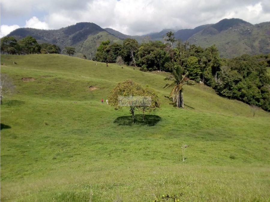 venta de finca ganadera en rio frio tulua valle