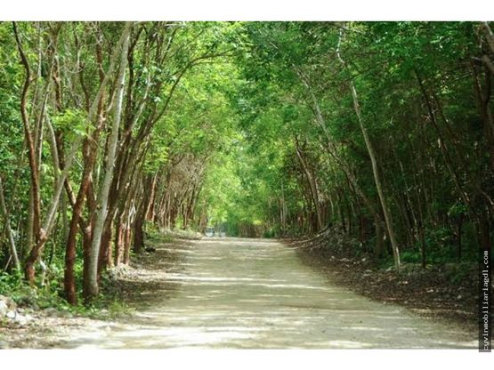 lotes ecologicos selva maya en cancun