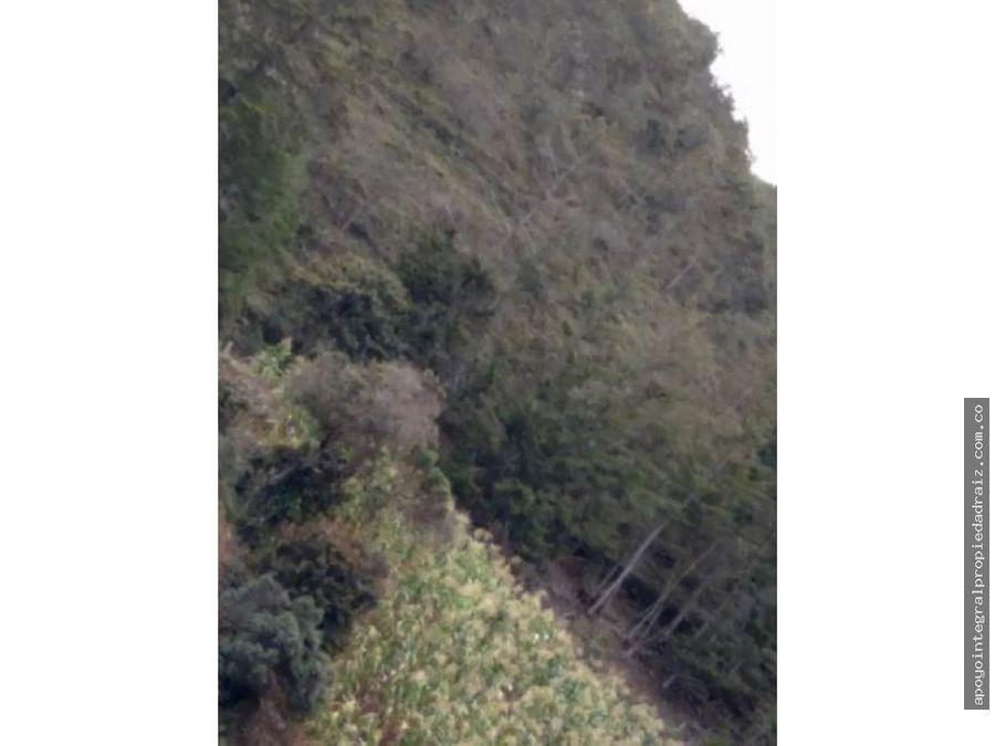 venta de finca vereda la magdalena san vicente