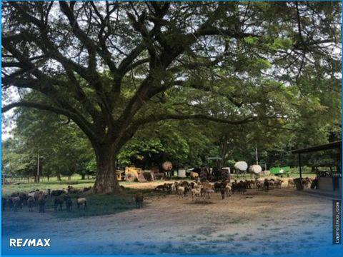finca productiva de 3240 hectareas estado cojedes