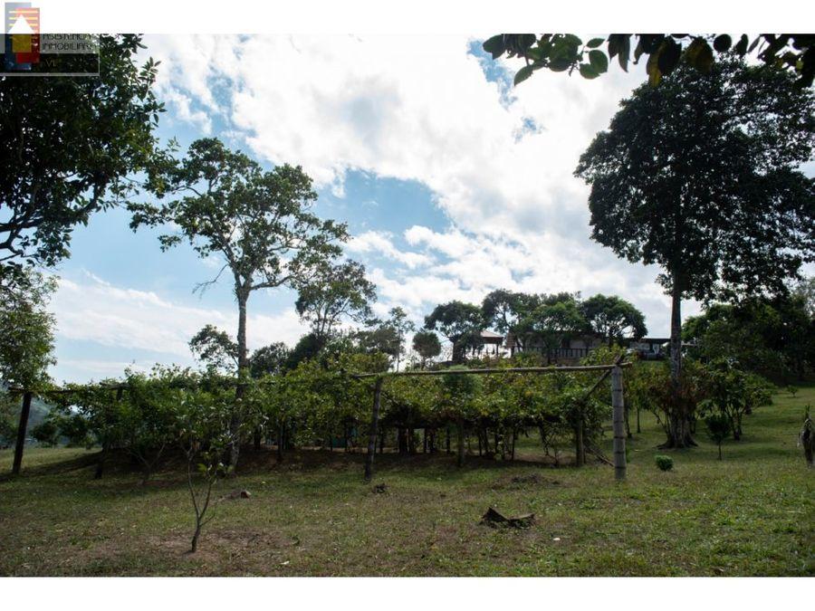 venta finca 15000 m2 villeta arboles frutales