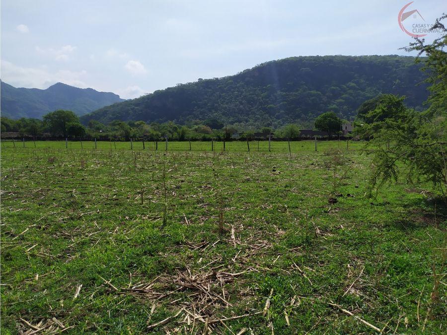 terreno de 5000 m2 en san andres de la cal tepoztlan morelos