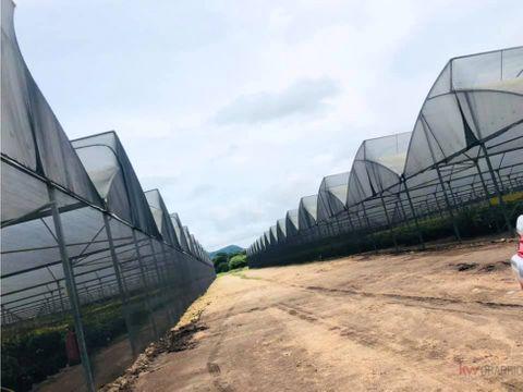 plan de inversion ingresos pasivos mango aguacates limones