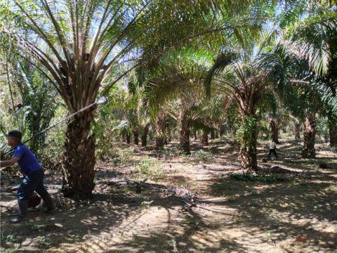 en venta finca de tierra fertil 7032 hectareas en chiriqui bugaba