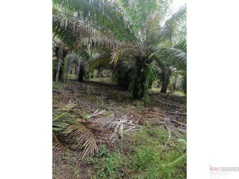 en venta finca de palma aceitera en chiriqui alanje 7805 hectareas