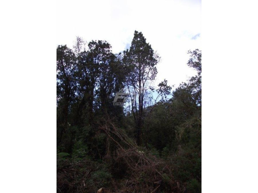 venta de terreno 103 has bosque nativo en chiloe