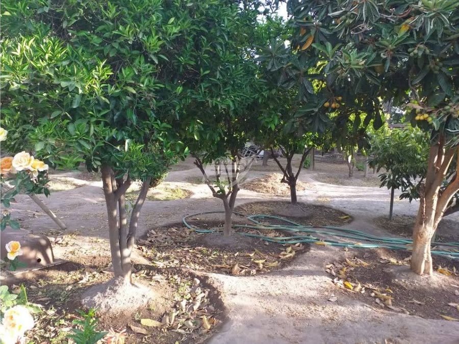 venta casa 3d 1b en terreno 2127m2 con arboles frutales santa maria