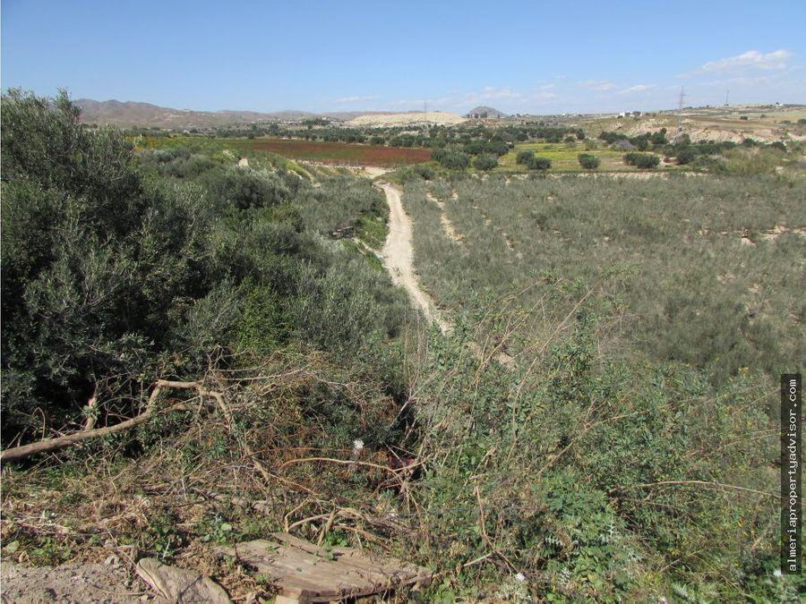 cortijo con olivos y pozo de agua