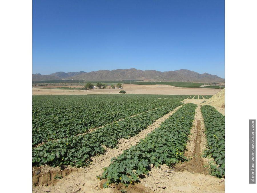finca agricultura pulpi 80h