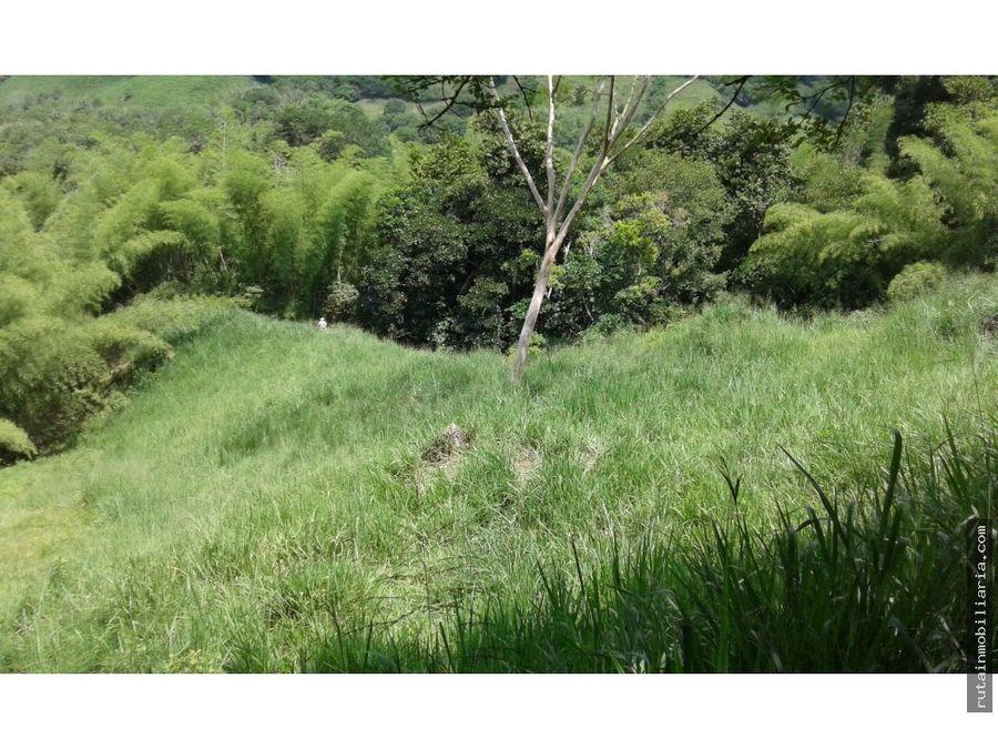 finca ganadera quimbaya san jorge