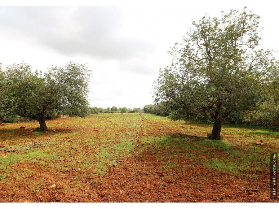 terreno entre felanitx y campos