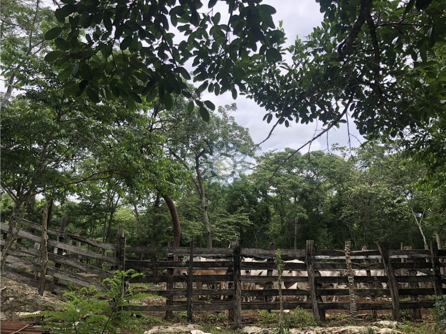 rancho con cenote cerca de nah balam