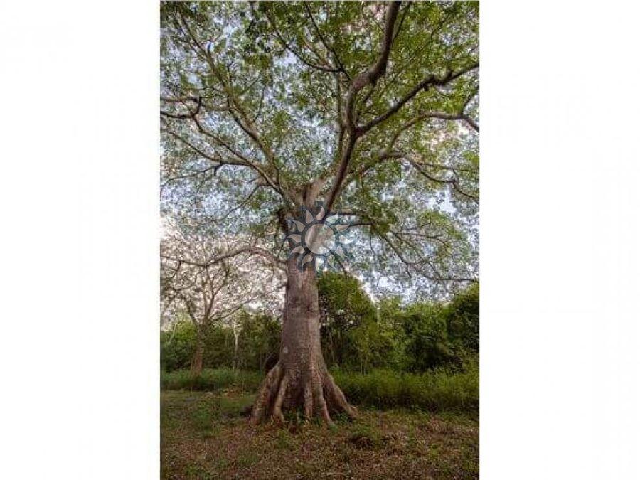 en venta terreno con casona y cenote en temozon