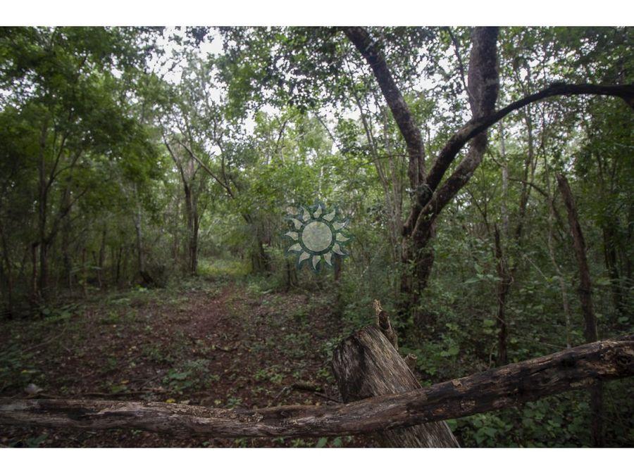 se vende rancho de 21 hectareas en uayma yucatan