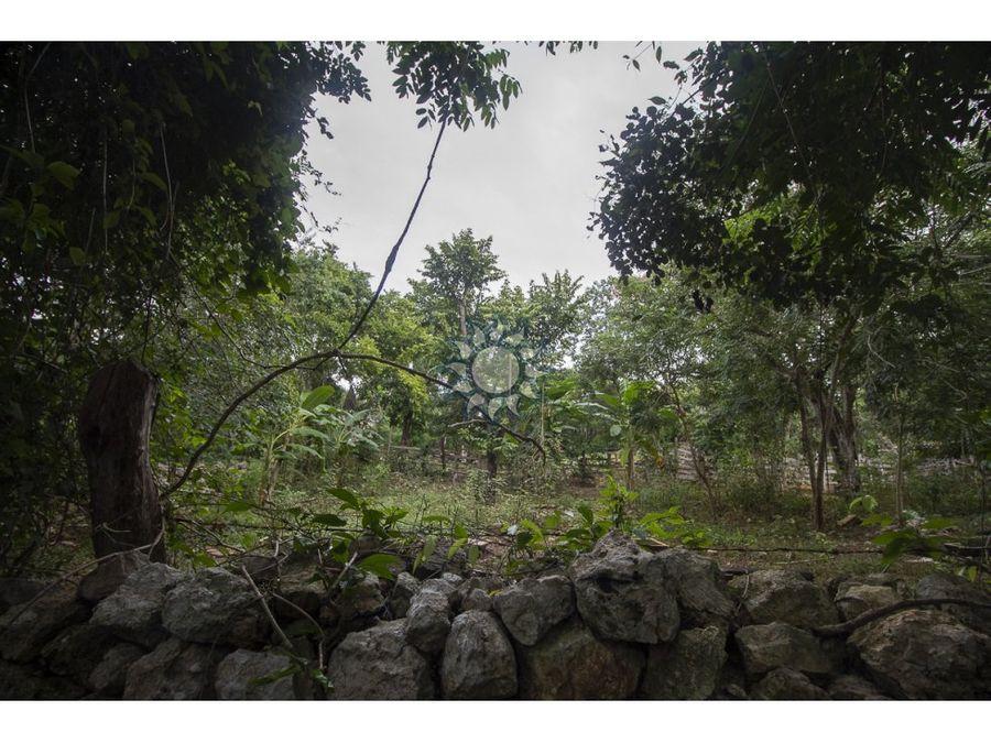 rancho en venta de 142 hectareas en uayma yucatan