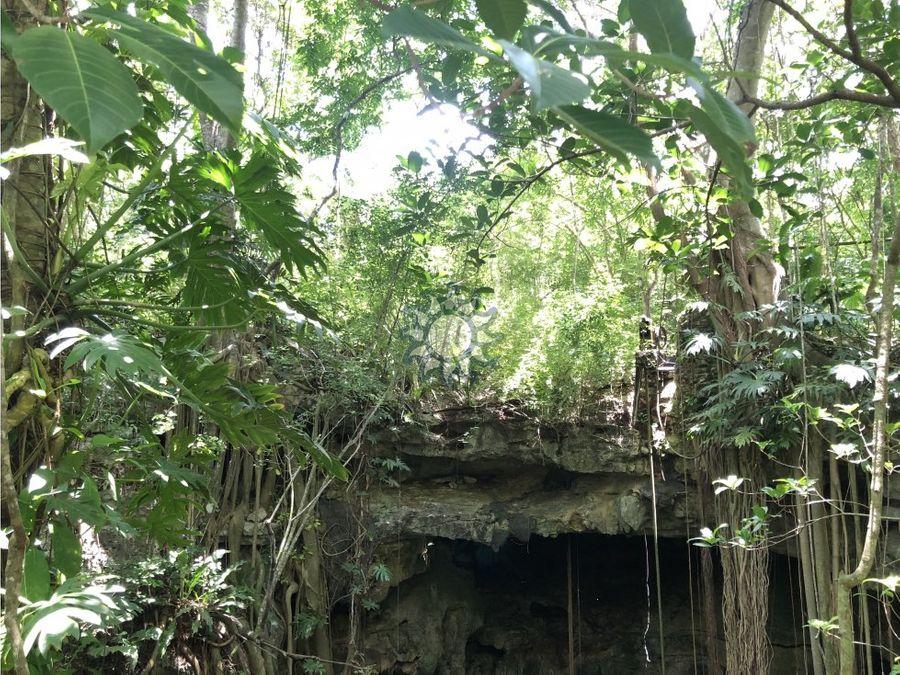 10 hectareas con cenote y monte alto