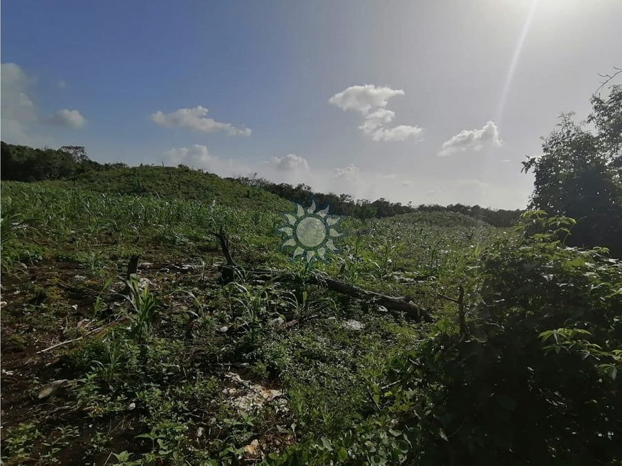 terreno titulado en tixcacapupul