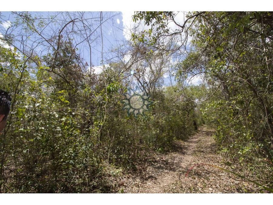 rancho en venta en yalcoba yucatan 1025 hs