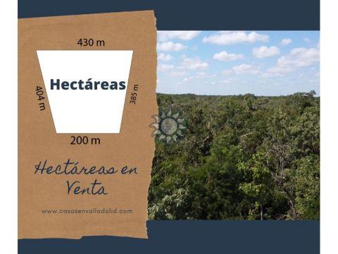 venta de hectareas en tekom yucatan